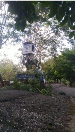 Perbaikan dan Trabas Ranting Pohon di Pemakaman Cokro Negoro